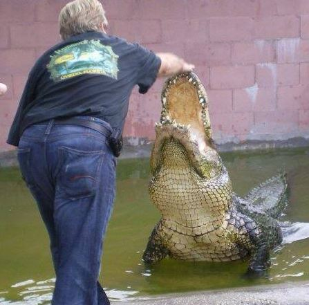image of a trainer working with an alligator at black hammock adventures one of the free things and stuff to do in orlando