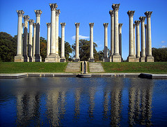 image of the national arboretum one of the Free Things and Stuff to Do in Washington DC