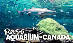 Ripleys Aquarium of Canada coupon