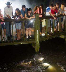 gator night shine nighttime tour at Gatorland one of the cheap, fun things to do in Orlando Florida
