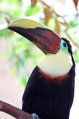 image of one of the birds at bird kingdom, one of the cheap, fun things to do in niagara falls, ontario, canada