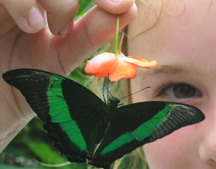image from the Butterfly conservatory one of the cheap, fun things to do in niagara falls ontario canada