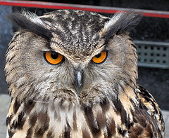 image of an owl from the center for birds of prey one of the Cheap, Fun Things to See & Do in Orlando