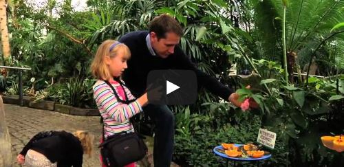 image of the butterfly conservatory featured in a video of cheap, Fun Things to Do in niagara falls