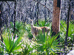 image of the ocala national forest one of the Free Things and Stuff to Do in Orlando