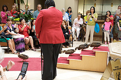 image of the peabody ducks one of the Free Things and Stuff to Do in Orlando