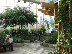 image of the Peggy Notebaert Nature Museum one of the free Things and Stuff to Do in Chicago