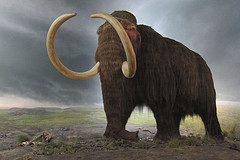 image of a wooly mammoth at the royal bc museum one of the Best Cheap Things to See and Do in Victoria, BC