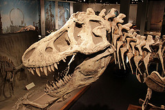 image of the royal tyrrell museum one of the Cheap, Fun Things to See & Do in Calgary
