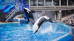 image of seaworld one of the Cheap, Fun Things to See & Do in Orlando