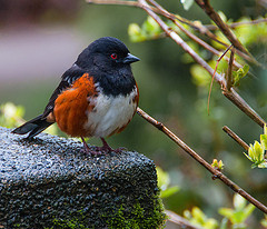 image of the Stanley Park Bird Walk one of the Best Cheap Things to Do and Fun Stuff to See in Vancouver