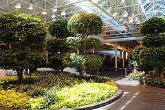 image of the TD Devonian Gardens one of the Free Things and Stuff to Do in Calgary