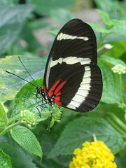 image of the victoria butterfly gardens one of the Best Cheap Things to See and Do in Victoria, BC