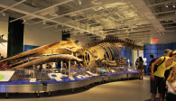image of the canadian museum of nature one of the ottawa tourism attractions that offers discount coupons on admission
