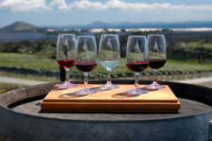 image of a wine tour with cheese pairings one of the affordable wine tour in niagara falls ontario canada