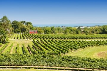 image of a private-tour-of-niagara-falls-wineries one of the affordable wine tours in niagara falls ontario canada