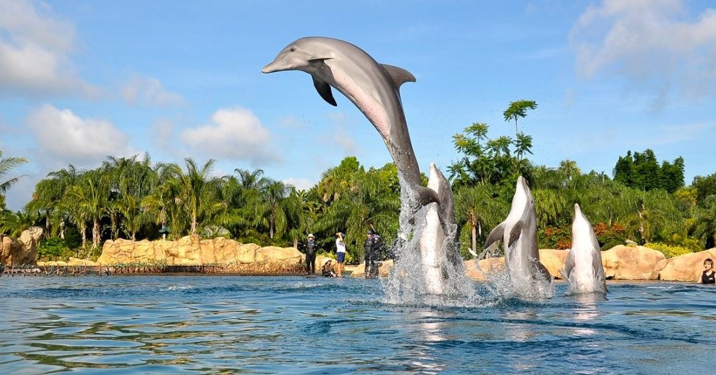 dolphins jumping out of the water at Discovery Cove one of the cheap things to do when visiting Orlando Florida
