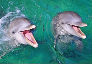 swimming with the dolphins one of the cheap excursions you can do when planning a trip to an all-inclusive in Cuba